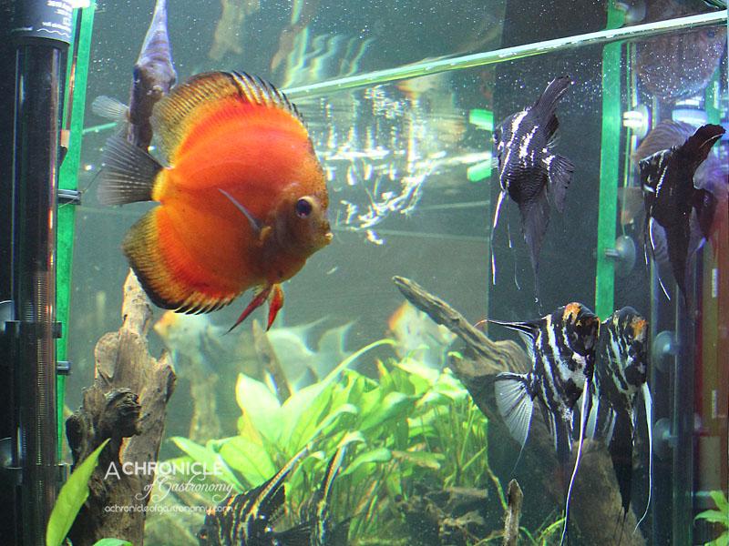 Masak Ku - Aquarium