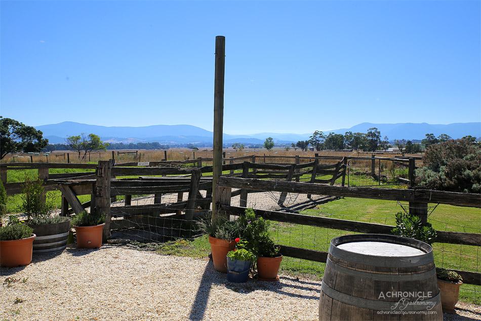Yarra Valley Wine & Food Festival 2017 Preview - Yarra Valley Dairy